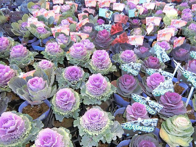 花壇用商品